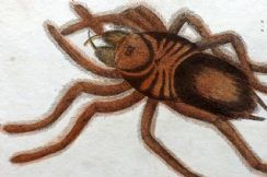 20th October 2020. Cuvier Insect Prints